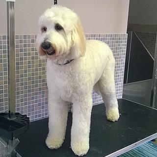 Dog Grooming in Aylsham, Norfolk